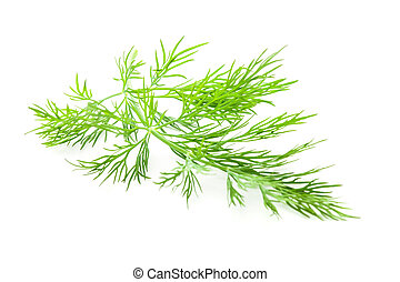 Fresh twig of dill isolated on white background
