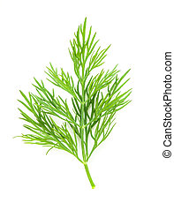 Fresh twigs of green dill isolated on white background