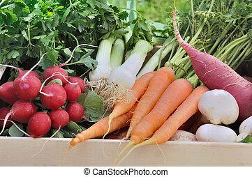 fresh vegetable in garden