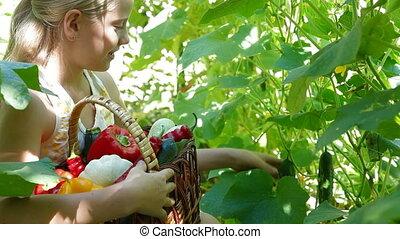Fresh Vegetable in the Garden