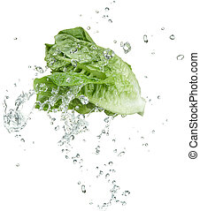 fresh vegetable with water splash on white background