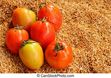 Fresh vegetable -Tomato