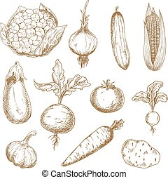 Healthful fresh farm tomato, carrot, onion, garlic, cucumber, corn cob, eggplant, cauliflower, beet and radish vegetables hand drawn sketch icons. Great for old fashioned recipe book or kitchen interior accessories design
