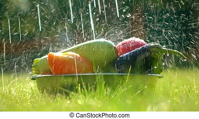 Fresh vegetables in a bowl and scattering water drops 4K...