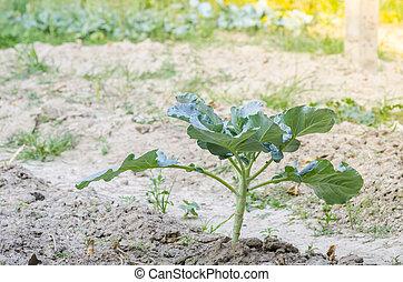 Fresh vegetables in a organic vegetable plot