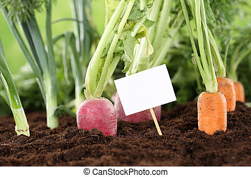 Fresh vegetables in a vegetarian garden with a white sign
