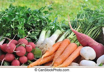 fresh vegetables in garden