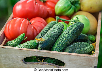 Fresh vegetables in greenhouse