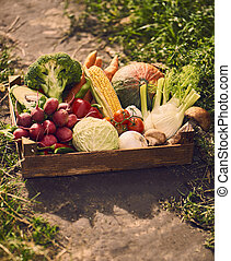 Fresh vegetables in wooden box.