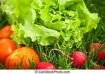 fresh vegetables laying on green grass