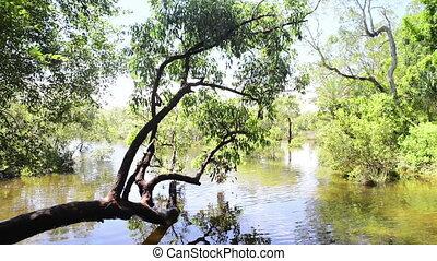 Fresh Water Creek - Fresh water source Myora Springs on...