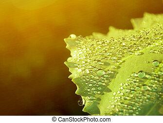 Fresh water drops on green leaf