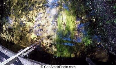 Fresh water stream  - Central Florida fresh water stream