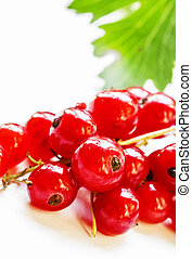 Fresh wet red currant with leaves, white not isolated background, macro shot, selective focus, shallow depth of field