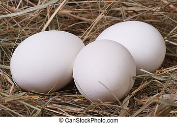 Fresh white chicken eggs in a fragrant meadow hay closeup