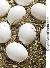 fresh white eggs on hay nestle