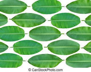 Fresh whole banana leaf background