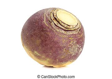 turnip - fresh whole raw turnip, white background