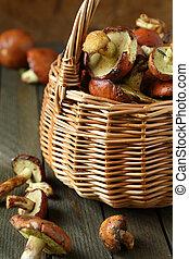 fresh wild mushrooms in a basket
