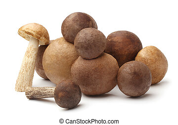 Fresh wild mushrooms (Leccinum scabrum)