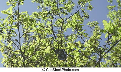 fresh young green oak leaves in bright sun light, prores...