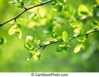 Fresh young spring leaves in forest