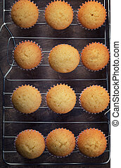 Freshly backed plain cupcakes on cooling ruck, top view,...
