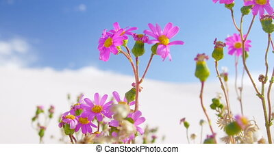 Freshly bloomed pink flowers 4k - Close-up of freshly...
