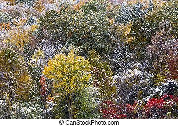 freshly, caído, neve, ligado, folhagem baixa