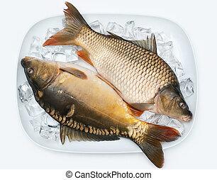 carp on ice