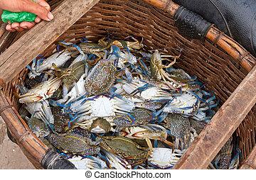 Freshly caught blue crabs (lat. Callinectes sapidus) in fishing villiage Ham Ninh, Phu Quoc, Vietnam