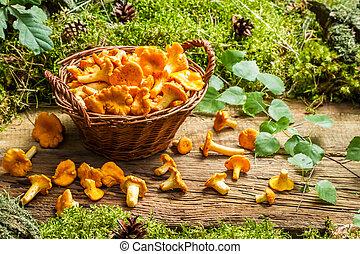 freshly, colhido, cogumelos, em, a, cesta feito vime