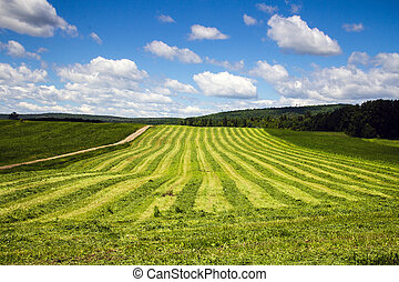 freshly cut hay field drying landscape