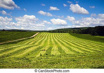 freshly cut hay field drying landscape