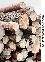 Freshly cut tree pine logs