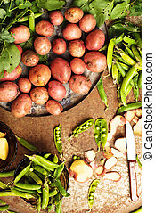freshly dug potatoes from a garden. metal table with potatoes. Close up shot of a basket with harvested potatos