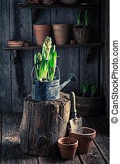 Freshly grown spring flowers in the rustic cottage