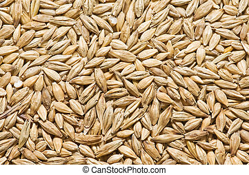 freshly harvested barley - barley in the field showing the...