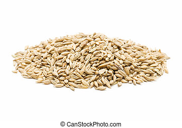 freshly harvested barley - lot of barley on white background...