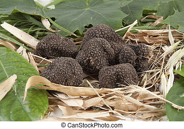 Freshly harvested black truffle