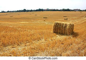 Freshly harvested field