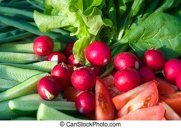 Freshly harvested home grown vegetables. Growing organic vegetab