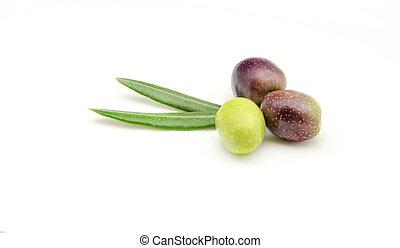 olives - Freshly harvested olives