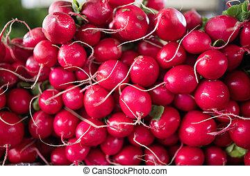 Freshly harvested, purple colorful radish. Growing radish. Growing vegetables.