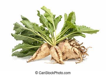 sugar beet - freshly harvested sugar beet on white...
