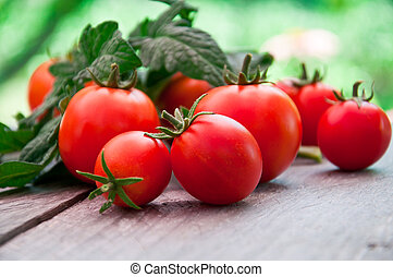 cherry tomatoes - Freshly harvested summer cherry tomatoes...