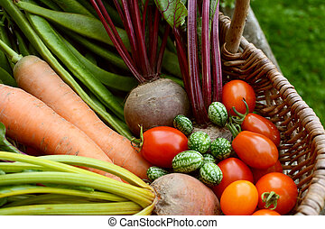 Freshly harvested vegetables from the allotment in a basket