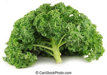 freshly harvested whole kale cabbage on a white background