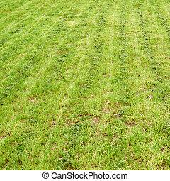 Freshly manicured grass lawn