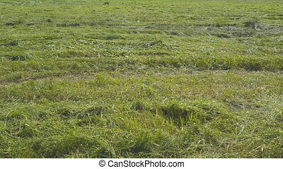 Freshly mowing grass in meadow - Freshly mowing grass in a...